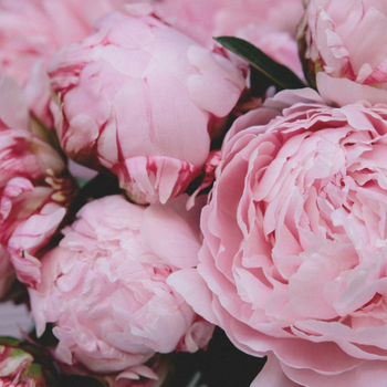 Introducing Peony Flower Form