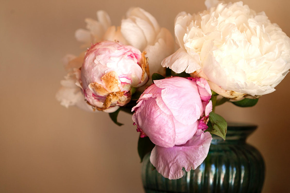 How Should Peonies Be Planted?
